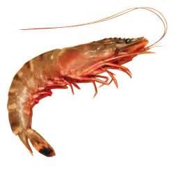 shrimp shrimptext twitter