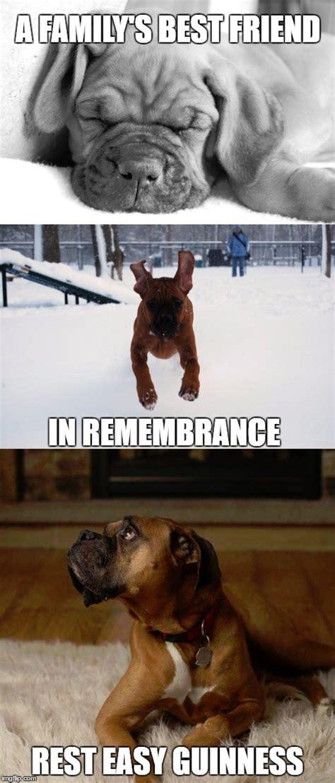 boxer dog imgflip