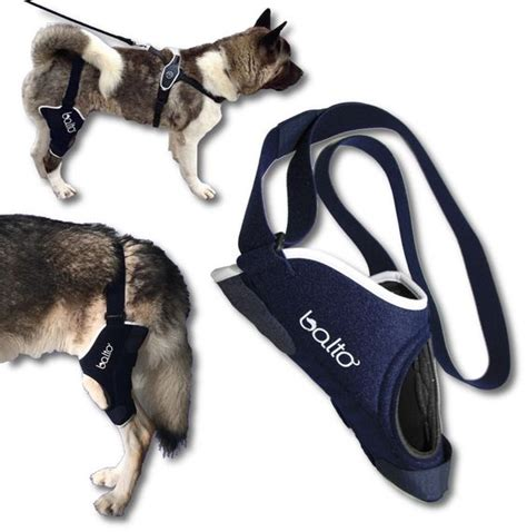 acl brace for dogs the world s catalog of ideas