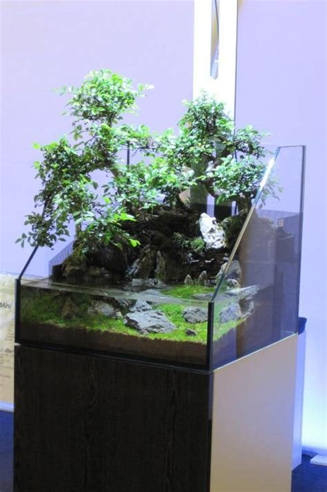 aquascape tank for sale bonsai aquascaping and tanks on pinterest
