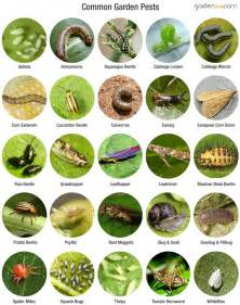 pests in garden organic garden pest garden365