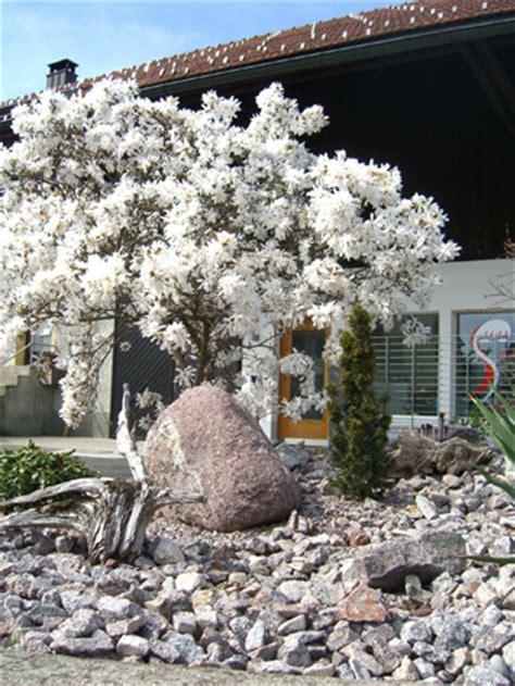 steingarten pflanzenauswahl steingarten lage gestaltung und bepflanzung homegate ch
