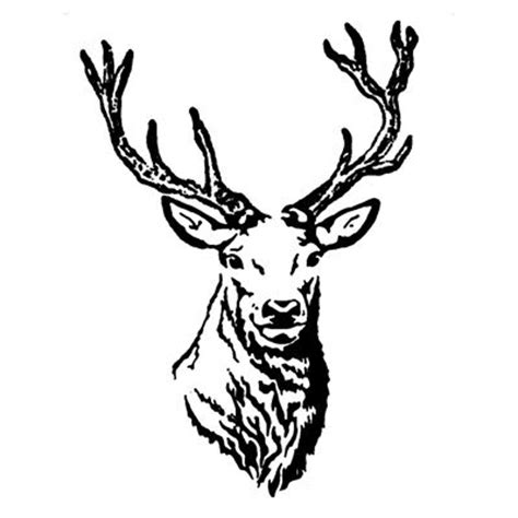 stag in classic