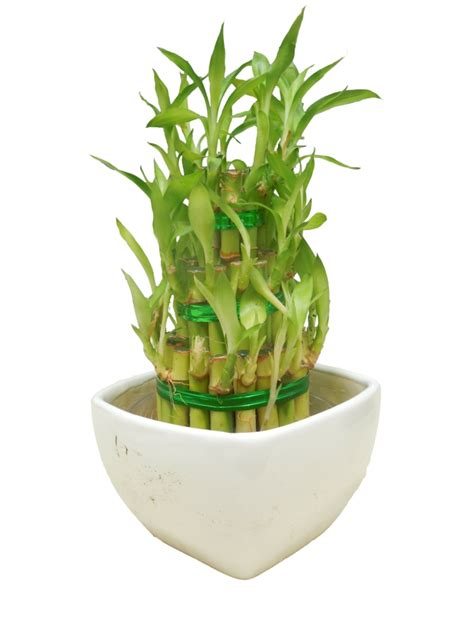 zimmerpflanzen die viel sonne vertragen zimmerpflanzen die gl 252 ck bringen