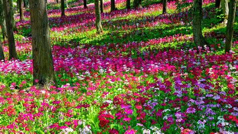 Beautiful Flowers In Garden Beautiful Garden Flowers Wallpapers Pics Gallery