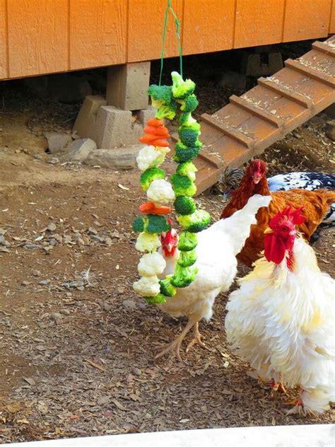 backyard chicken treats 5c39b6dab2b59135a50ce676fd35e5f3 jpg 720 215 960 chickens