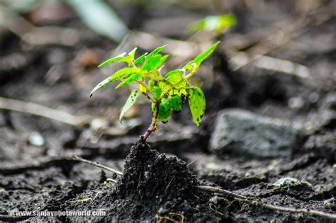 Hidrogel Beautiful Soil Plant Sanjay Photo World Growing Plants From Soil Hd Wallpapers