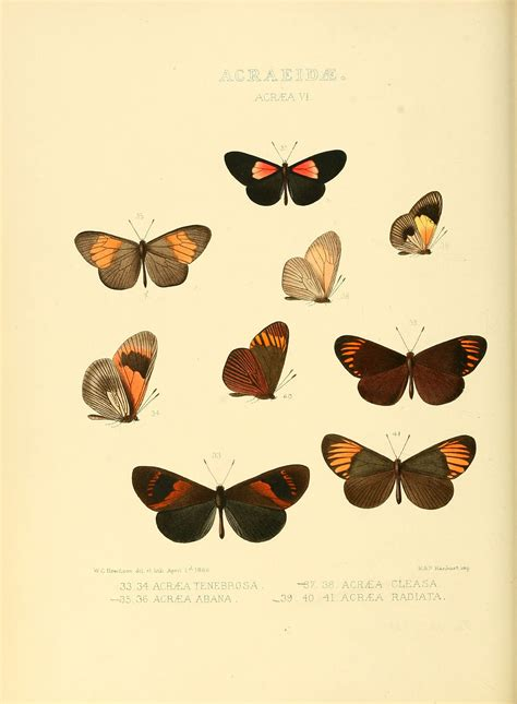 a guide to butterflies of mexico and central america books abananote