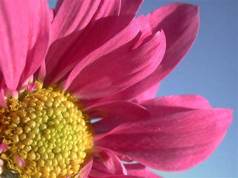fiori sfondo foto gratis per sfondi