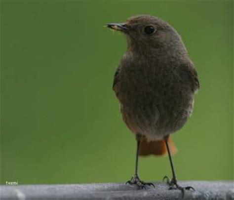 aves de espaa y cosas sobre aves archivos la casa del diamantla casa del diamant