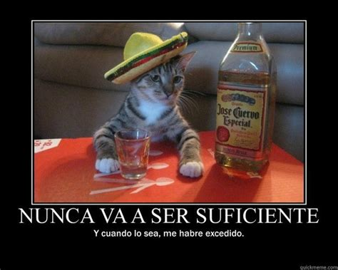 Funny Tequila Memes - tequila cat inspirational memes quickmeme
