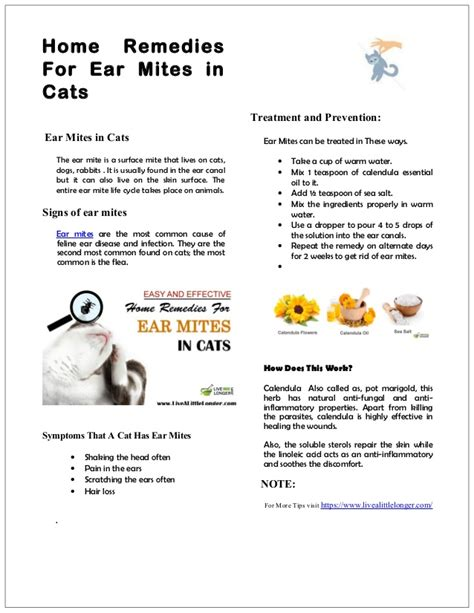 home remedies for mites on dogs home remedy for ear mites in cats