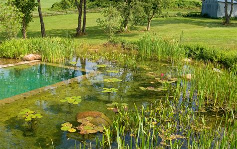 natural swimming pool natural swimming pool aqua system