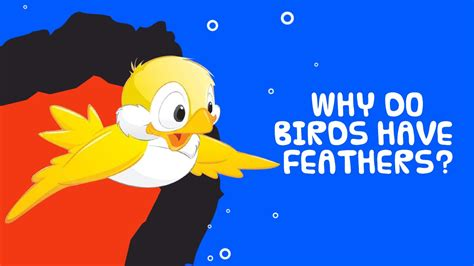 why do birds have feathers interesting facts about birds