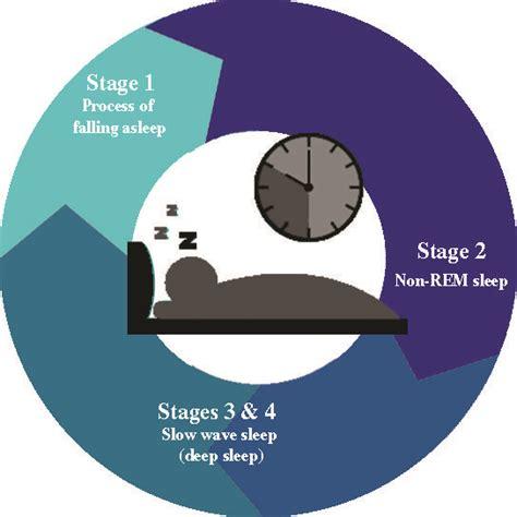 rem schlaf the basics of your sleep cycle chronobiology