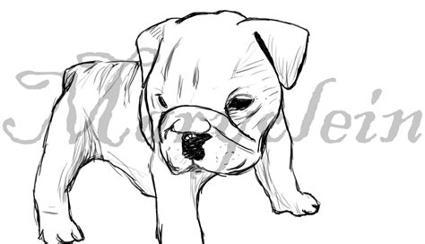 puppy sketch bulldog sketch templates
