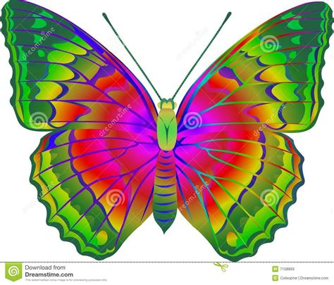 2019 White Kemben Butterfly butterfly stock photos image 7158893