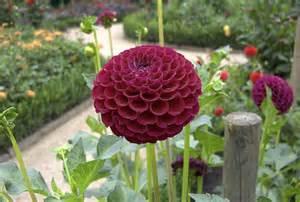 perennial plant redorbit