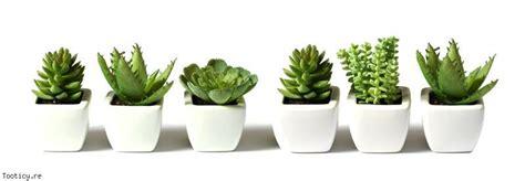 the best indoor plants for small spaces tiny living les accessoires d une d 233 coration quot zen quot d 233 co magazine