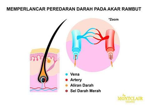 Jual Montclair Hair Serum cara kerja montclair hair serum 4 mengatasi kebotakan