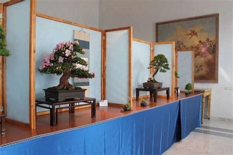 vasi bonsai usati mercatino bonsai forum attrezzi e vasi per bonsai