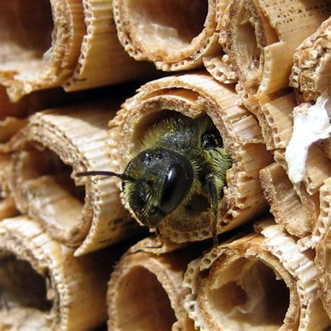 diy projects to help save the bees 1 million women