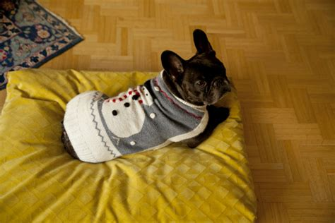 cuscino per cani grandi cuscini per cani comfort e stile per i vostri cuccioli