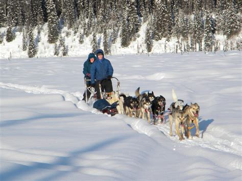 sledding alaska anchorage ak dogsledding day tour guided alaska sledding day trip