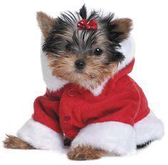 yorkie puppies ebay puppies on shih tzu pugs and yorkie