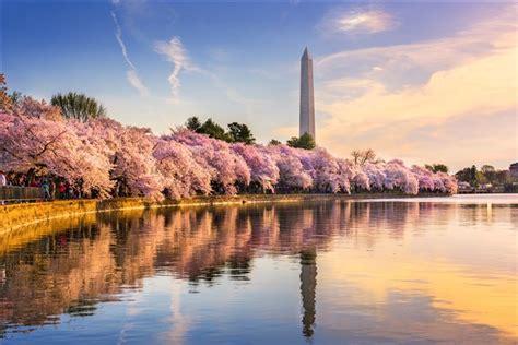 cherry blossom festival dc washington dc the cherry blossom festival