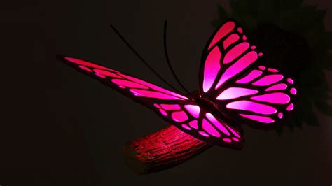 pink butterfly light light pink butterfly
