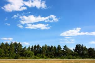 Landscape Pine Trees Pine Trees Landscape Www Imgkid The Image Kid Has It