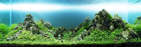 mountain aquascape aga aquascaping contest delivers stunning freshwater views