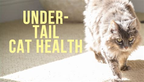 can dogs get hemorrhoids cat health petcha