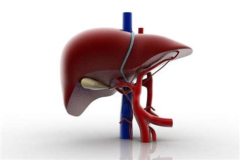 alimentazione per il fegato grasso fegato grasso cosa fare forumsalute it
