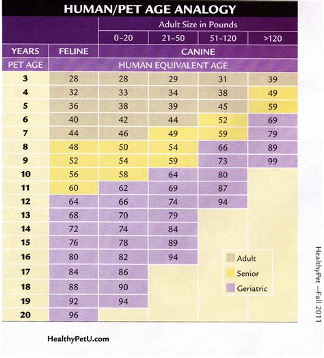 years to human years chart age lifespan dogs biological age breeds picture
