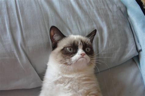 grumpy cat grumpy wallpapers wallpaper cave