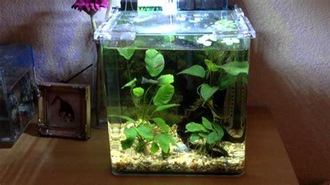 aquarium design for guppies small or nano aquariums betta guppies adf youtube
