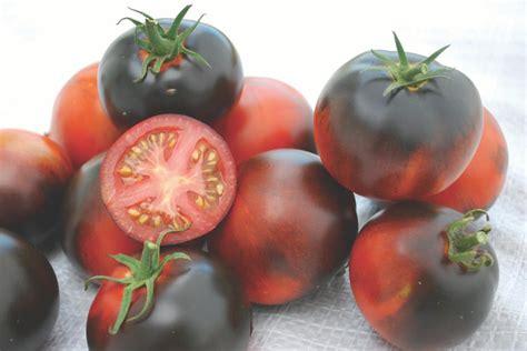 Benih Tomat Indigo Apple Paketan tomato varieties for northwest gardens hgtv