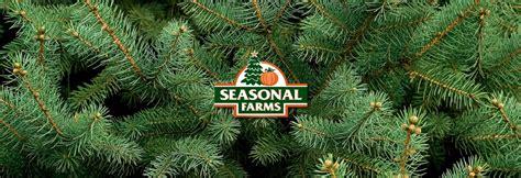 fresh cut christmas tree kingman az pumpkin lot in gilbert san valley carefree arizona