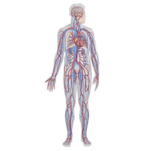 dilatazione vasi sanguigni vene varicose addio