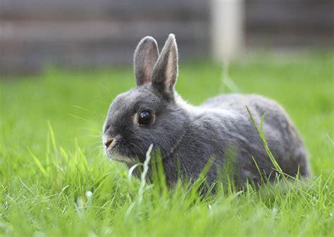 Grey Rabbits most popular rabbit names of 2013