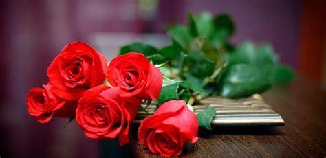 imagenes de rosas rojas para una madre rosas con brillo flores hermosas lindas hermosas