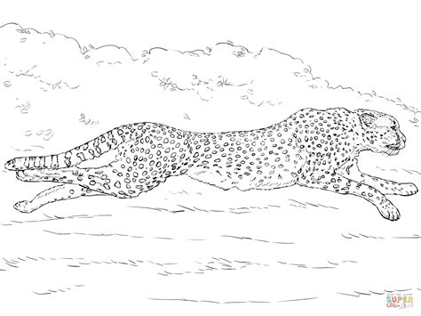 running cheetah coloring page free printable coloring pages 42 coloring pages cheetah to print gianfreda net