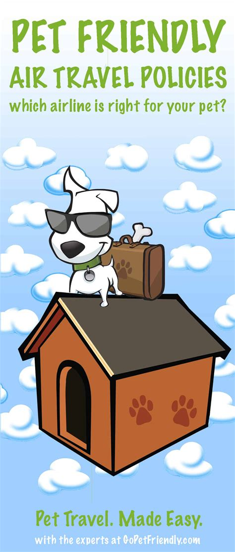 in cabin pet travel airline pet travel policies