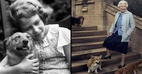 queen elizabeth dog queen elizabeth swears she s done adopting dogs but then