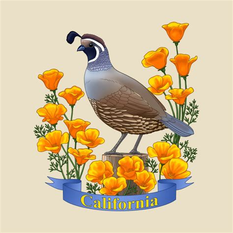 Bird Wall Art Stickers california state bird quail and poppy flower bird t