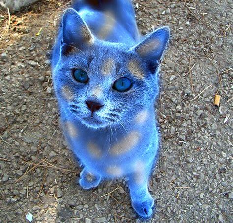 Icestar   Warrior Cats Roleplay Wiki   FANDOM powered by Wikia