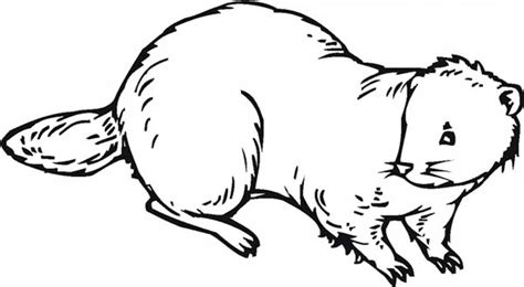 beaver nocturnal animal beaver coloring page