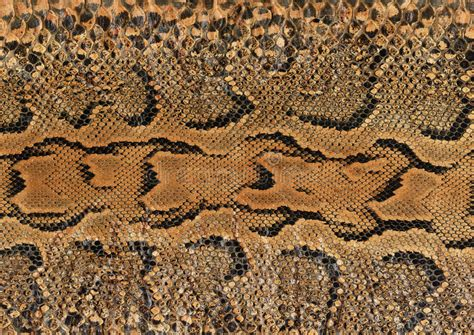 pattern up slang snake skin stock photo image of animal reptile textured